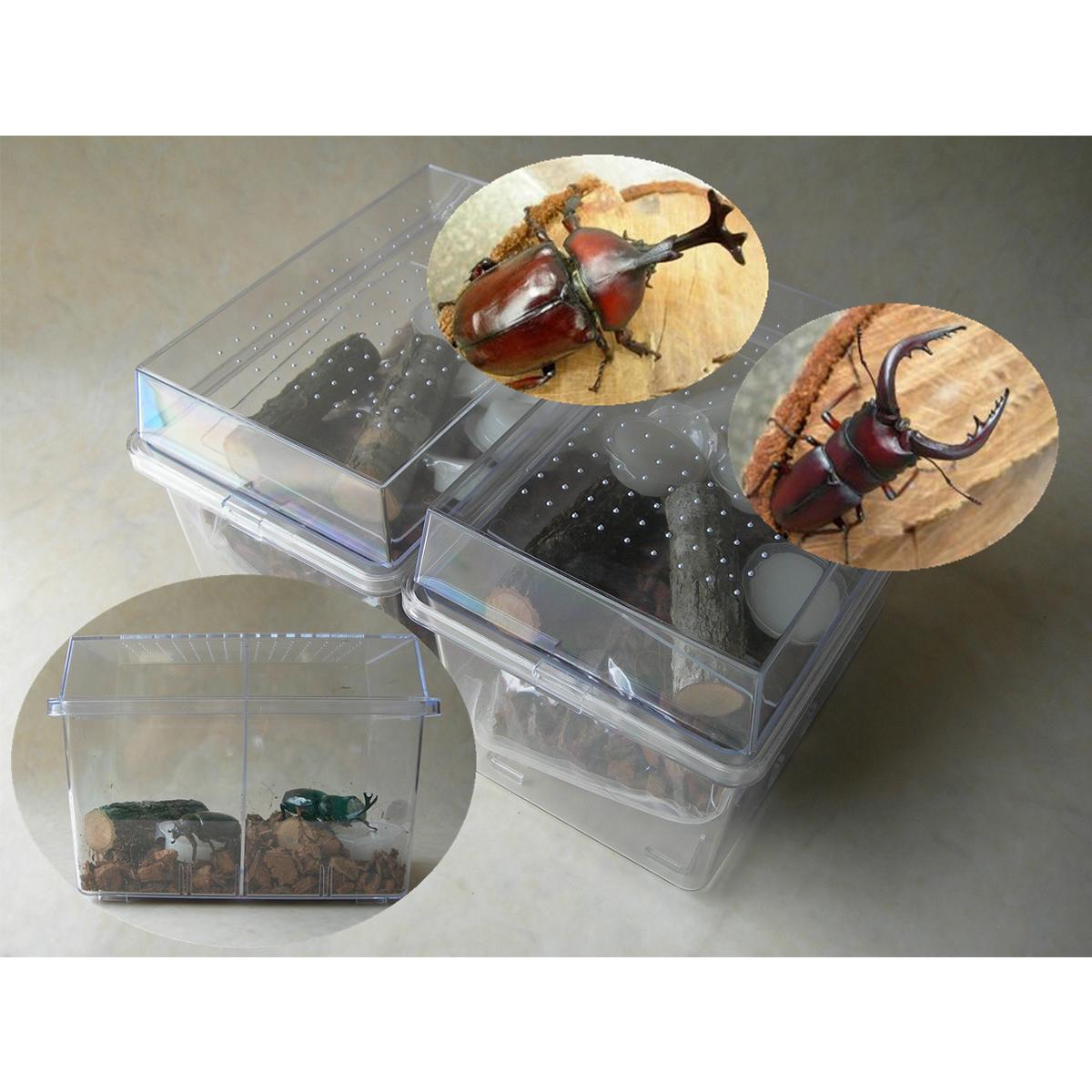 【ふるさと納税】カブト虫・ノコギリクワガタ(成虫)オスメスペア飼育セット付