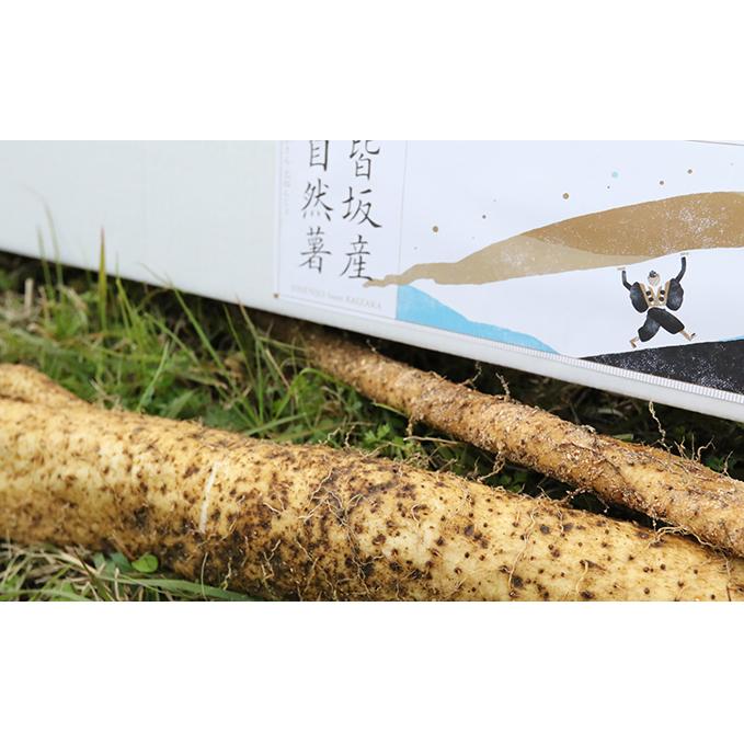 【兵庫県上郡町】 【ふるさと納税】皆坂の土地で栽培した自然薯 1.4kg相当 【野菜・根菜】 お届け:2019年11月上旬~2020年2月下旬