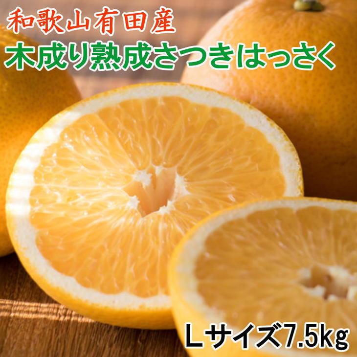【ふるさと納税】こだわりの和歌山有田産木成り熟成さつき八朔7.5Kg(Lサイズ)