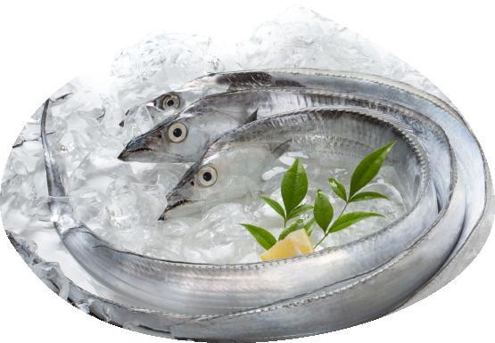 【ふるさと納税】紀州 太刀魚2本(1本:500~600g)