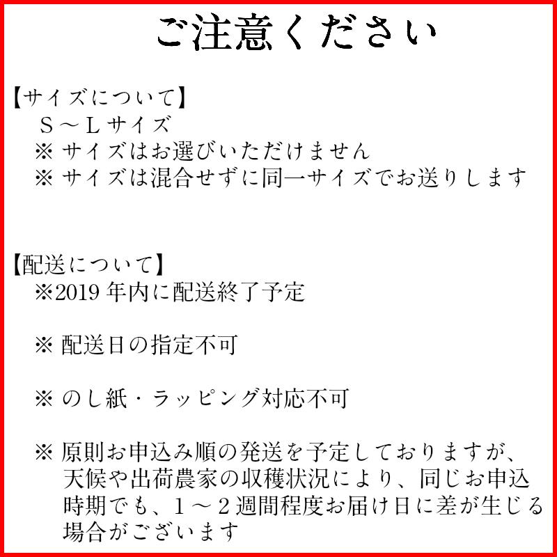 Chain reaction weak heavy body Jewish race sea S M L hometown support  contribution of the Arida-shi authorization mandarin orange (5 kg) day  origin