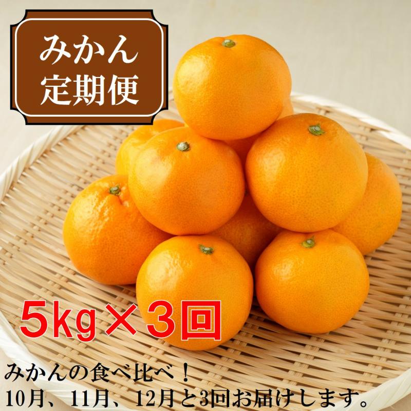 【ふるさと納税】厳選みかん定期便5kg 3回(10月、11月、12月)