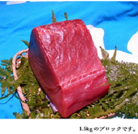 【ふるさと納税】水揚げ高日本一!南紀勝浦産 生まぐろ ブロック 約1.5Kg
