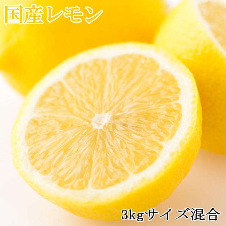 【ふるさと納税】【産直】和歌山産レモン約3kg(サイズ混合)※2021年3月中旬~4月下旬頃に順次発送予定