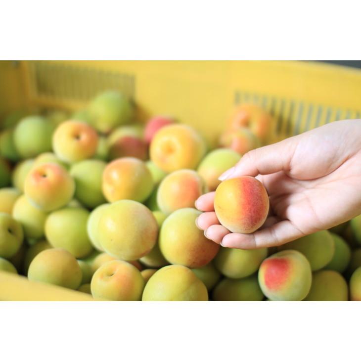 【ふるさと納税】観音山完熟オレンジ梅 3kg※2021年6月中旬~6月末発送予定