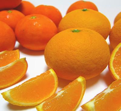 【ふるさと納税】有田育ちの濃厚柑橘詰め合わせセット 5kg※2021年1月下旬頃より順次発送予定