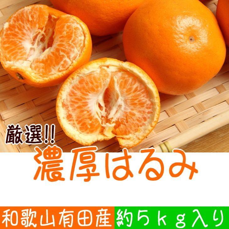 【ふるさと納税】厳選!和歌山有田の濃厚はるみ M又はLサイズ 約5kg