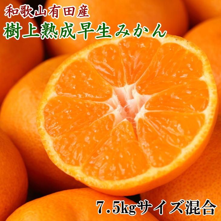 【ふるさと納税】紀州有田産早生みかんの樹上熟成みかん7.5kg(サイズ混合)