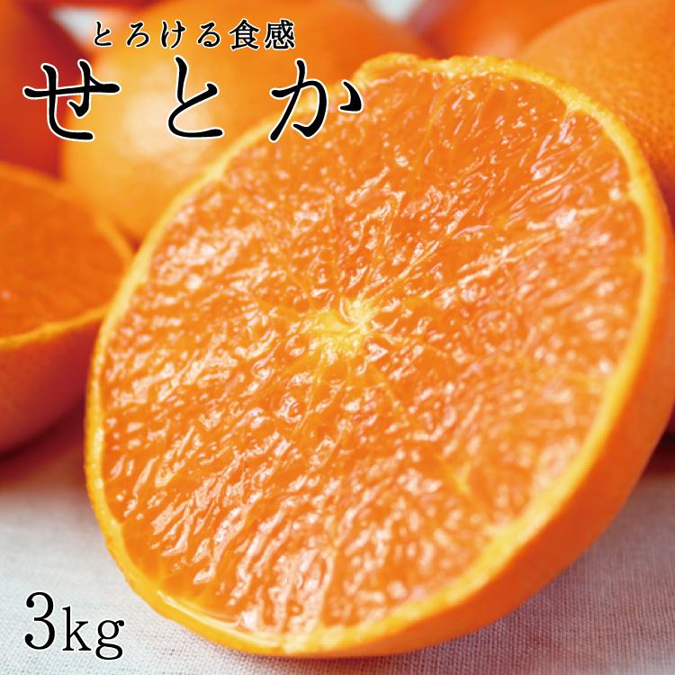 【ふるさと納税】とろける食感!ジューシー柑橘 せとか 約3kg※2021/2/10~2021/2/28頃に順次発送予定(お届け日指定不可)