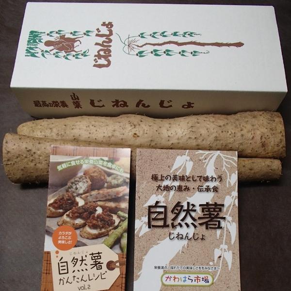 【ふるさと納税】自然薯【期間限定】