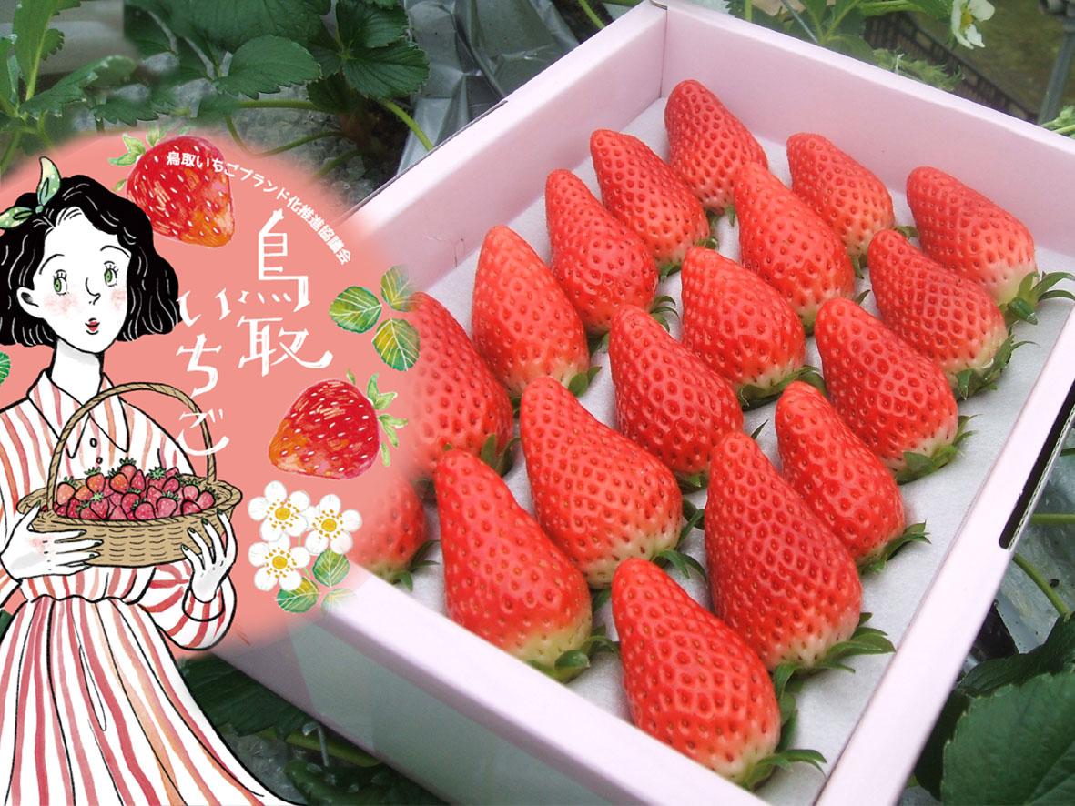 【ふるさと納税】246 鳥取産苺「あきひめ」大粒詰め合わせ いちご イチゴ フルーツ 果物