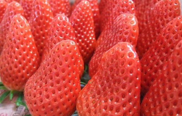 【ふるさと納税】【E-6】米村農園「大粒いちご」B