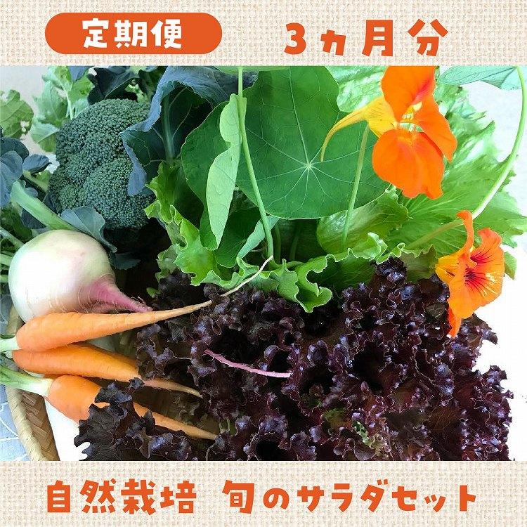 【ふるさと納税】【定期便】自然栽培 旬のサラダセット 3ヶ月