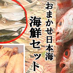 【ふるさと納税】【定期便】302.おまかせ日本海海鮮セット(生)