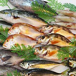 浜田のお魚をぜひご賞味ください 魚介類 モデル着用 注目アイテム 魚貝類 直営ストア 591.山陰浜田港水揚げ季節の鮮魚セット ふるさと納税