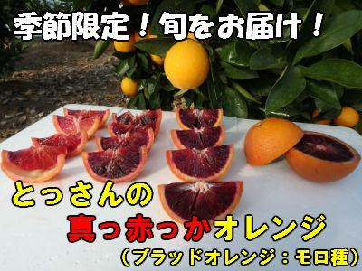【ふるさと納税】 A074 とっさんの真っ赤っかオレンジ(ブラッドオレンジ:モロ種)(配達指定日不可)