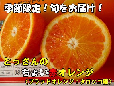 【ふるさと納税】 果物 フルーツ 島根県産 A075 とっさんのちょい赤オレンジ(ブラッドオレンジ:タロッコ種)(配達指定日不可)