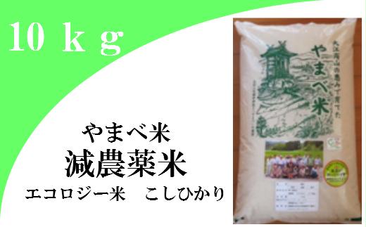 【ふるさと納税】新米 無洗米 米 こしひかり B073-2 【無洗米】減農薬米(こしひかり100%)(令和元年産) 10kg