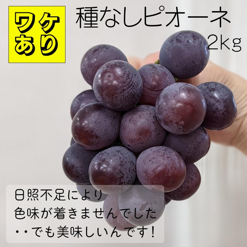 限定15個 ワケありですが美味しいんです 日本 ふるさと納税 訳あり 種なし 限定 ピオーネ 受賞店 15個 2kg
