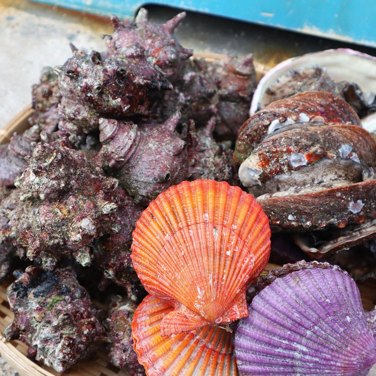 【ふるさと納税】 アワビ あわび 天然 養殖 活 0.5kg サザエ ヒオウギ 貝 貝づくし