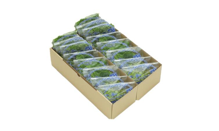 【ふるさと納税】1-34 植物工場産野菜・お徳用セット