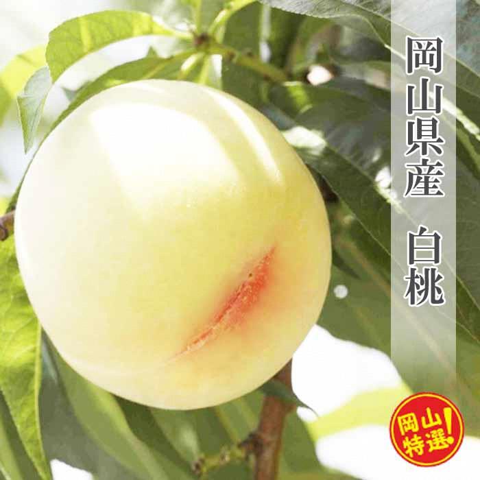 【ふるさと納税】0033-B-003 岡山県産白桃約4kgセット