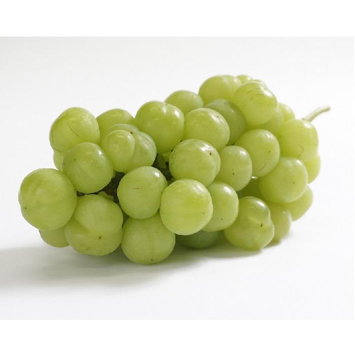 お気に入 感謝価格 ふるさと納税 0020-B-065 桃太郎ぶどう びぜん葡萄