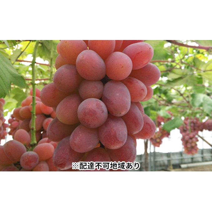 岡山県美咲町 再再販 ふるさと納税 セール 登場から人気沸騰 美咲町産 ぶどう 紫苑 お届け:2021年10月1日~2021年11月20日 フルーツ 果物類 ブドウ 2kg