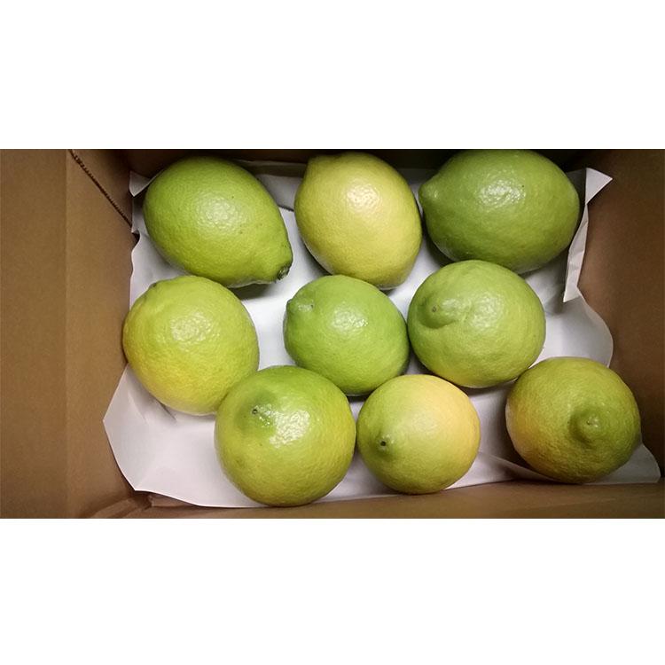 【ふるさと納税】レモン 皮まで美味しい瀬戸田無農薬レモン 1kg(7~10個)