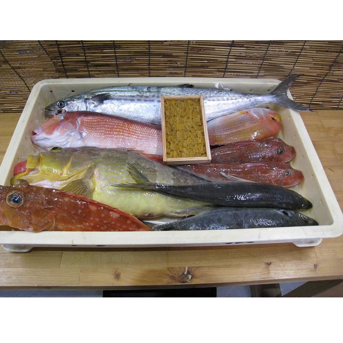 A-004【ふるさと納税】山口県漁協大海の海の幸セット(年6回コース)