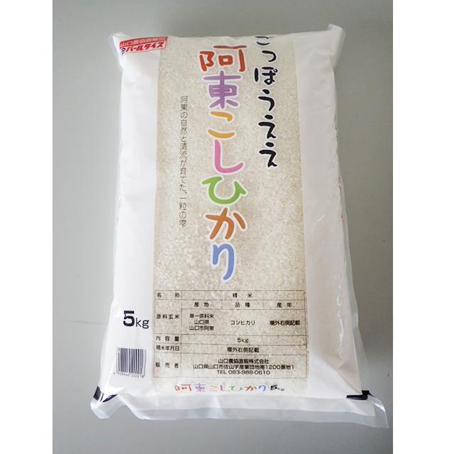 D-190【ふるさと納税】阿東こしひかり(普通精米5kg×2)