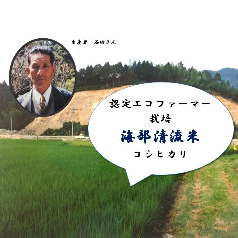 【ふるさと納税】ISD01 認定エコファーマー栽培! 海部清流米コシヒカリ5キロ