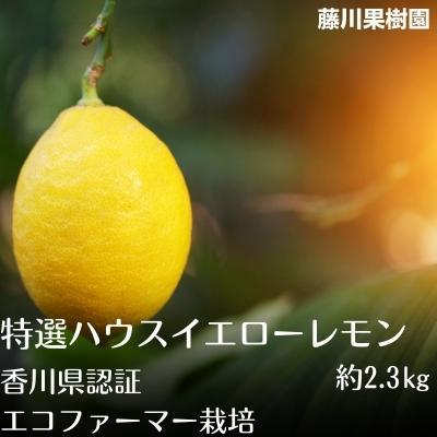 【ふるさと納税】特選ハウスイエローレモン※エコファーマー栽培 【柑橘類・レモン 】 お届け:2020年1月~3月中旬
