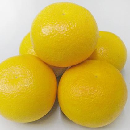 【ふるさと納税】八朔 約10kg 【果物類・みかん・柑橘類・デコポン・フルーツ】 お届け:2020年3月上旬~2020年3月下旬