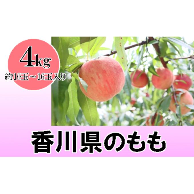 香川県東かがわ市 【ふるさと納税】讃岐の太陽育ち!もも 約4kg 【果物...