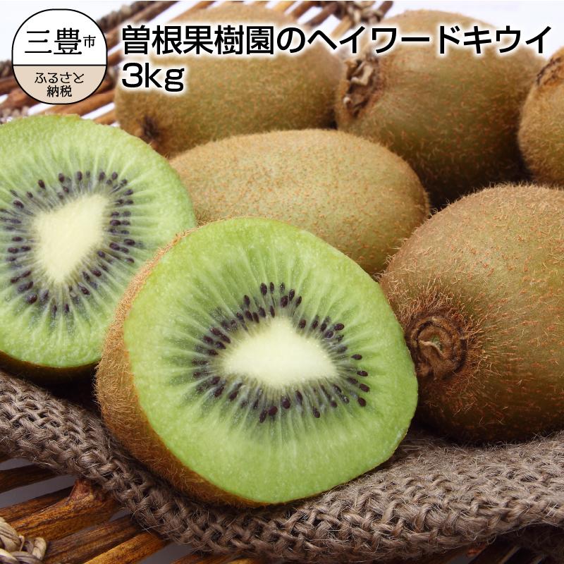 【ふるさと納税】曽根果樹園のヘイワードキウイ3kg(24~33玉入り)