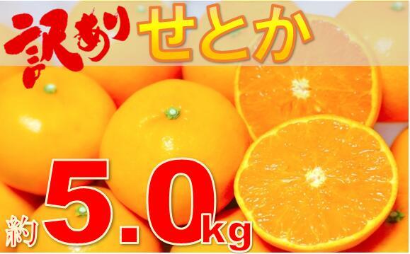 香川県三木町 【ふるさと納税】786 訳ありせとか 約5.0kg