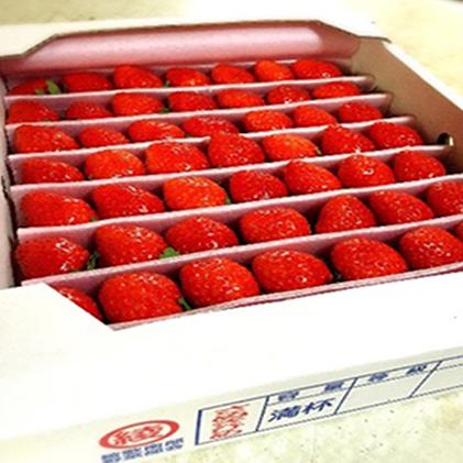 ☆新作入荷☆新品 香川県綾川町 ふるさと納税 1月~順次発送 さぬきひめ苺 つる付き約1kg お届け:2022年1月中旬~4月下旬 イチゴ いちご 並行輸入品 苺 果物類