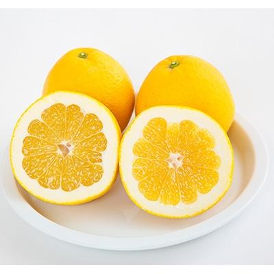 【ふるさと納税】【コウ果樹園】河内晩柑7kg【1064380】