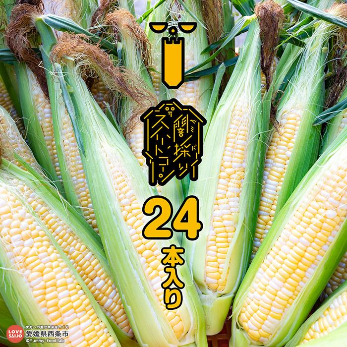 【ふるさと納税】peakfarm直送<闇採りスイートコーン24本入り>※2020年6月から8月末迄に順次出荷します。 野菜 とうもろこし 愛媛県 西条市 【冷蔵】【JP】