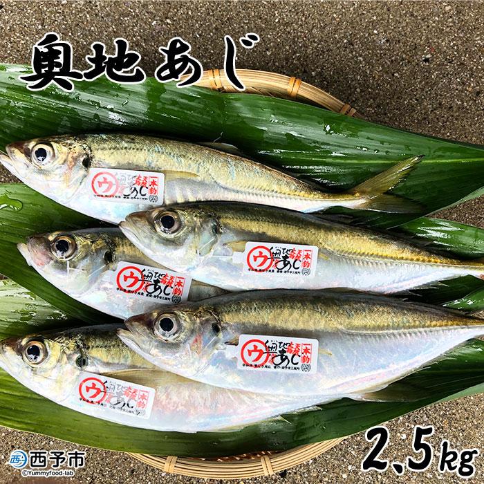 【ふるさと納税】<奥地あじ2.5kg>※1か月以内に順次出荷 鯵 魚介 鮮魚 魚 特産品 愛媛県 西予市 【冷蔵】