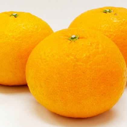 【ふるさと納税】愛南育ち 吉田農園 甘夏 約10kg 【果物類・柑橘類・フルーツ】 お届け:2020年3月中旬~2020年5月下旬
