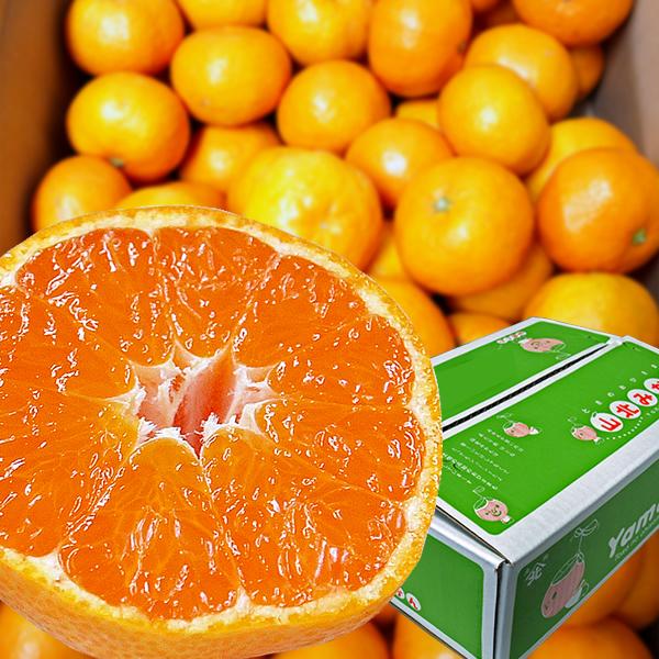 【ふるさと納税】高知の野菜・果物定期便