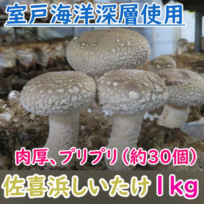 【ふるさと納税】NC002佐喜浜しいたけ(約1kg)