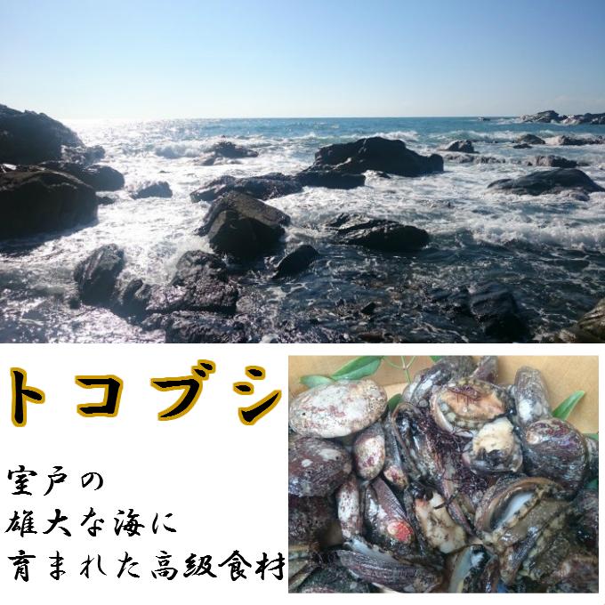 【ふるさと納税】RY016高級食材トコブシ(流れ子)の煮付け