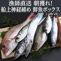 【ふるさと納税】 お楽しみ! 鮮魚詰め合わせ 旬の厳選! 獲れたその場で神経締めしているので鮮度抜群! 高級魚 送料無料