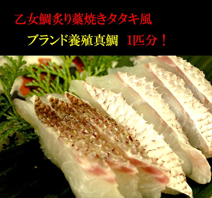 【ふるさと納税】乙女鯛 炙り藁焼きタタキ風 産地直送 送料無料
