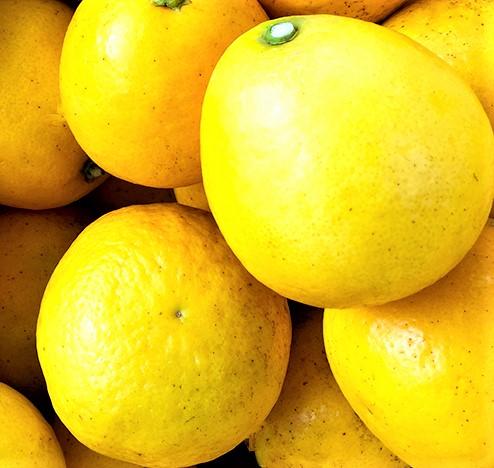【ふるさと納税】訳あり 小夏 5kg 産地直送 柑橘 みかん フルーツ 送料無料