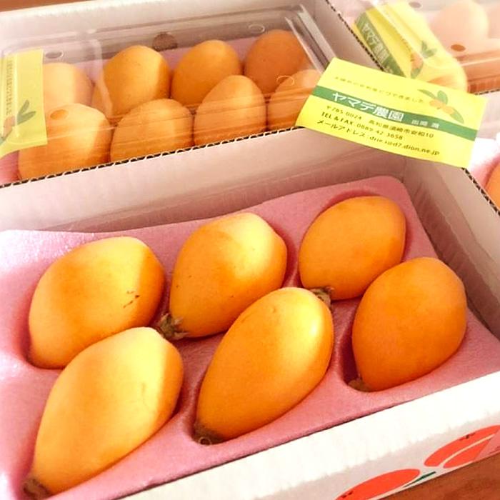 高知県須崎市 【ふるさと納税】ヤマデ農園 びわ4パック 平成31年度収穫分