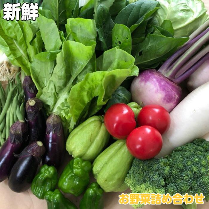 高知の新鮮野菜の詰合せ 買収 ふるさと納税 野菜 2人暮らし デポー 南国土佐のお野菜 食べきりサイズ にぴったり